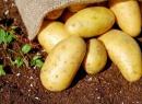 감자 오래 보관하려면